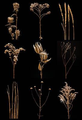 Prairie Plant Still Life Original by Steve Gadomski