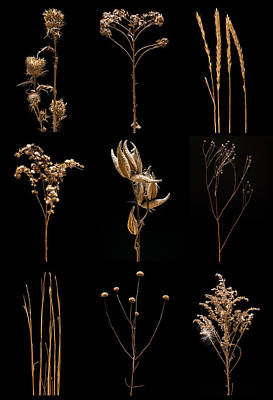 Prairie Plant Still Life Original