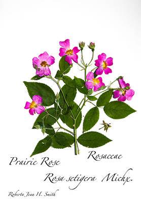 Photograph - Prairie Rose by Roberta Jean Smith
