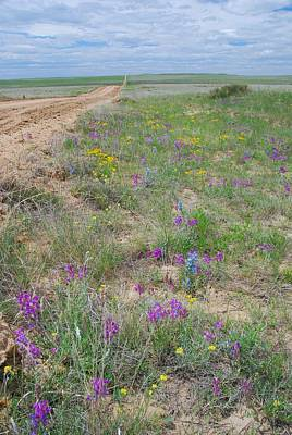 Photograph - Prairie Spring Landscape by Cascade Colors