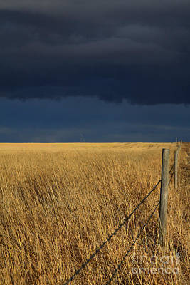 Photograph - Prairie Storm by Alyce Taylor