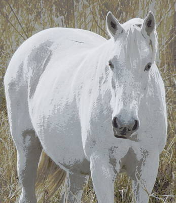 Photograph - Prairie White Beauty 1 by Sheri McLeroy