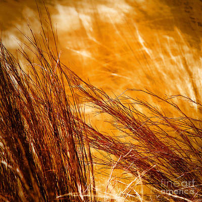 Prairie Winds Art Print