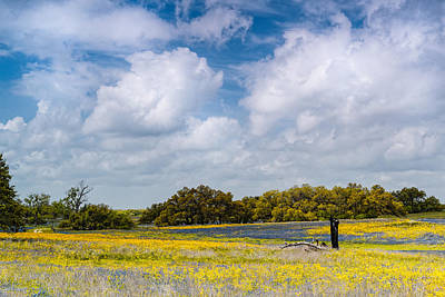 Photograph - Prairies And Rolling Meadows Of Texas In Springtime - Wildflowers Blooming In Stockdale by Silvio Ligutti