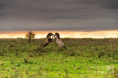 Fleetwood Mac - Prancing horses at sunset by IPics Photography