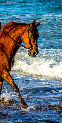 Prancing In The Sea Art Print