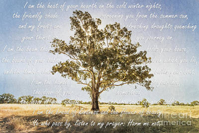 Gumtree Photograph - Prayer Of The Woods by Linda Lees