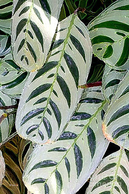 Digital Art - Prayer Plant by E B Schmidt