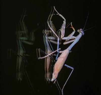Praying Mantis 2 Art Print by Angela A Stanton