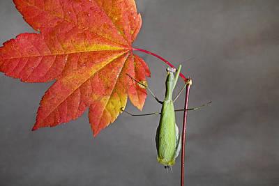 Praying Mantis Art Print by Buddy Mays