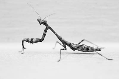 Praying Mantis Good Side Art Print