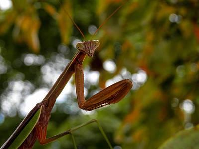Photograph - Praying Mantis Pose by Heather Sylvia
