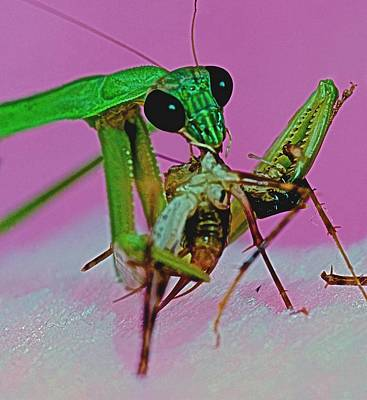 Canibal Photograph - Praying Mantis  Predator Of Insects  2 Of 2 by Leslie Crotty
