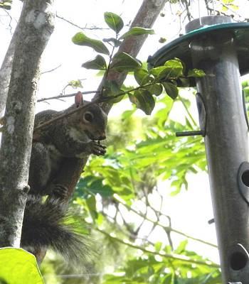 Photograph - Praying Squirrel by Belinda Lee