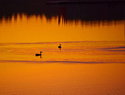 Photograph - Pre Dawn Light by Ron Roberts