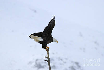 Birds Royalty-Free and Rights-Managed Images - Precarious Perch by Mike  Dawson