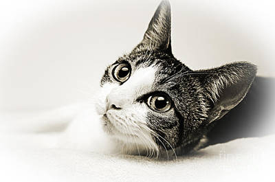 Andee Design Cats Photograph - Precious Kitty by Andee Design
