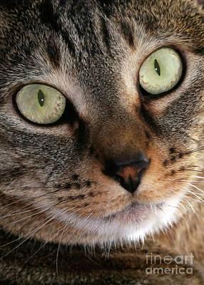 Photograph - Precious Kitty by Sabrina L Ryan