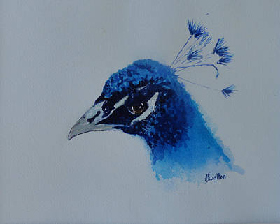 Painting - Precious Peacock by Judy Fischer Walton