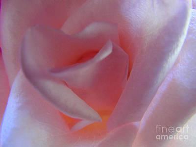 Beer Blueprints - Precious Pink Rose by Elizabeth Dow