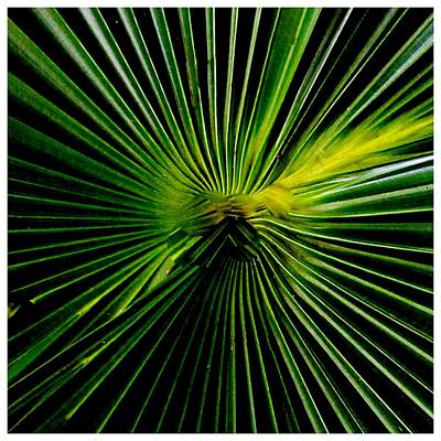 Photograph - Precision Green by Frank Wickham