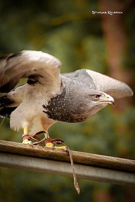 Photograph - Predator's Raise by Stwayne Keubrick