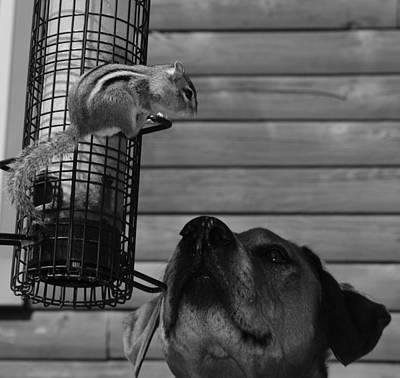 Predicament Photograph - Predicament by Mim White
