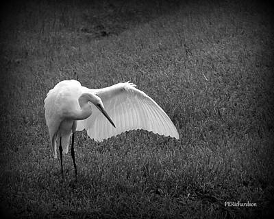 Photograph - Preen by Priscilla Richardson