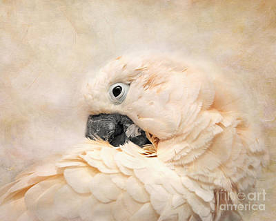 Cockatoo Photograph - Preening by Jai Johnson