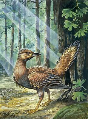 Paleozoology Photograph - Prehistoric Bird by Deagostini/uig