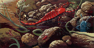 Paleozoology Photograph - Prehistoric Crustaceans by Deagostini/uig