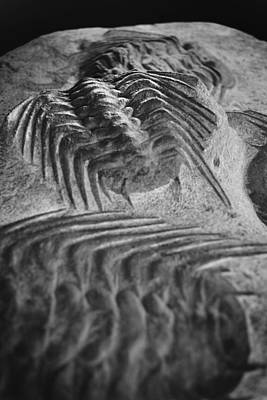 Photograph - Prehistoric Fossil by Richelle Munzon