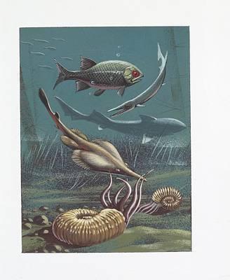 Prehistoric Marine Life Art Print