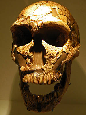 Photograph - Prehistoric Skull by Connie Fox