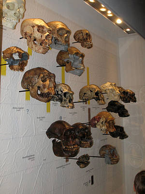 Photograph - Prehistoric Skulls by Connie Fox