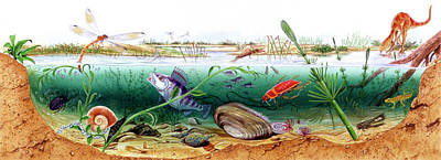 Paleozoology Photograph - Prehistoric Watertight Ecosystem by Deagostini/uig