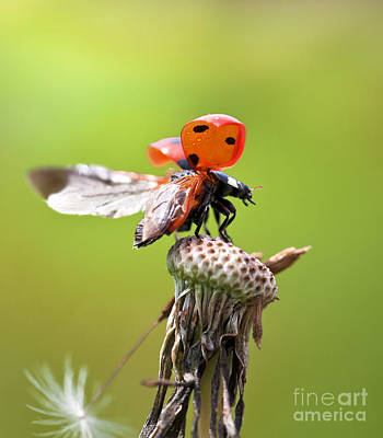 Good Luck Photograph - Prepare For Takeoff by Brandon Alms