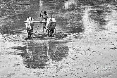 Hump Photograph - Preparing A Rice Paddy by Tim Gainey