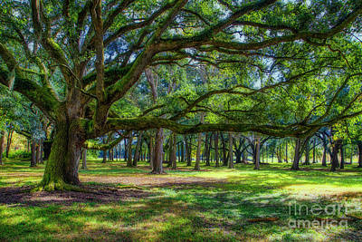 Photograph - Presenting The Live Oaks At Destrehan Plantation by Kathleen K Parker