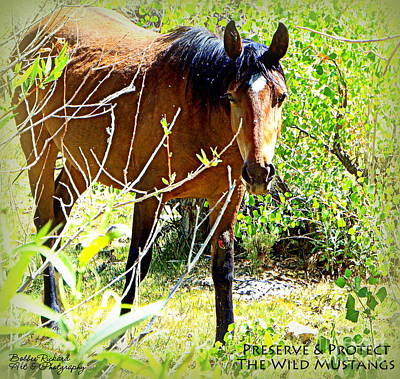 Photograph - Preserve And Protect The Wild Mustangs by Bobbee Rickard