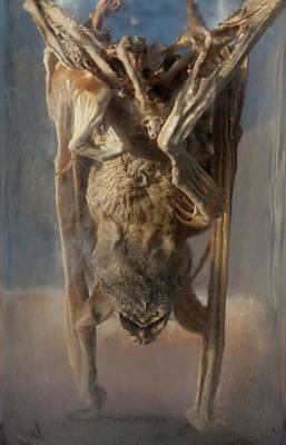 Preserved Panama Bat In Museum Jar Art Print by Paul D Stewart