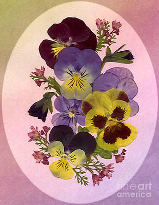 Photograph - Pressed Pansies by Em Witherspoon