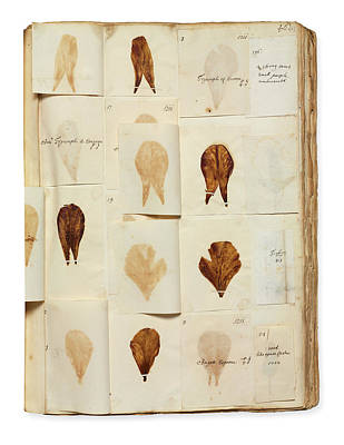 Pressed Tulip Specimens Art Print by Natural History Museum, London