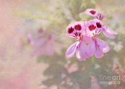 Florida Flowers Photograph - Pretty And Delicate In Pink by Sabrina L Ryan