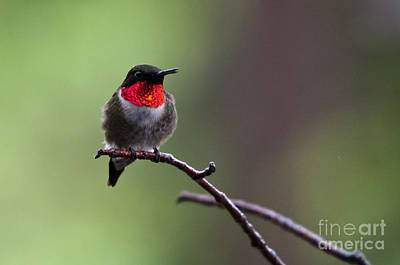 Photograph - Pretty And Perched by Cheryl Baxter