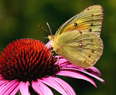 Pretty As A Butterfly Art Print