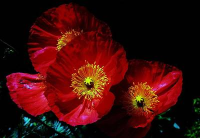 Photograph - Pretty As A Poppy by Helen Carson