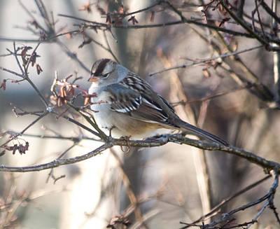 Sparrow Photograph - Pretty Bird by Jan M Holden