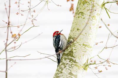 Peck Photograph - Pretty Bird by Rebecca Cozart