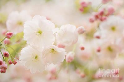 Pretty Blossom Print by Natalie Kinnear